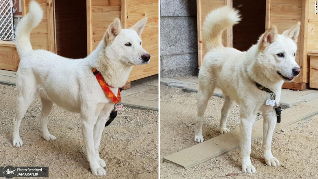 181001104046-south-korea-new-dogs-super-169