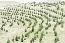 آغاز اجرای طرح کمربند سبز در 30 روستای محاصره در شن ریگان