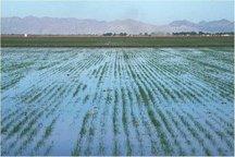 سهمیه آب کشاورزی چهارمحال و بختیاری کاهش یافت