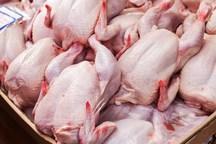 سازمان صمت تهران: مرغ به اندازه کافی در اختیار ما نگذاشتند