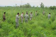 یگان محیط زیست از تصرف 4هکتار اراضی تالاب انزلی جلوگیری کرد