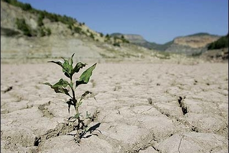 ۹۱ درصد وسعت خراسان جنوبی درگیر خشکسالی