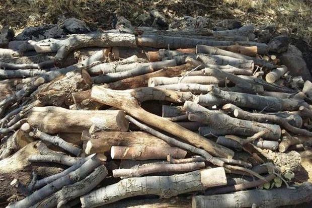 14 تن چوب قاچاق در سروآباد کشف و ضبط شد