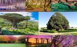 درختانی زیبا که سرشار از شگفتی اند+ تصاویر