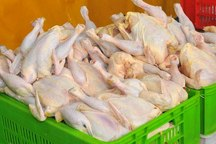 قیمت مرغ گرم کیلویی 2 هزار تومان در تهران ارزان شد