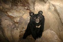 ردپای خرس در ارتفاعات بیرک خاش یافت شد