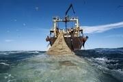 صید ترال یک جنایت محیطزیستی است