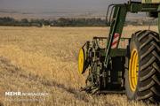۴۰ هزار تن گندم از زمینهای کشاورزی شادگان برداشت می شود