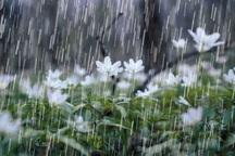 20 میلیمتر بارندگی در تکاب ثبت شد
