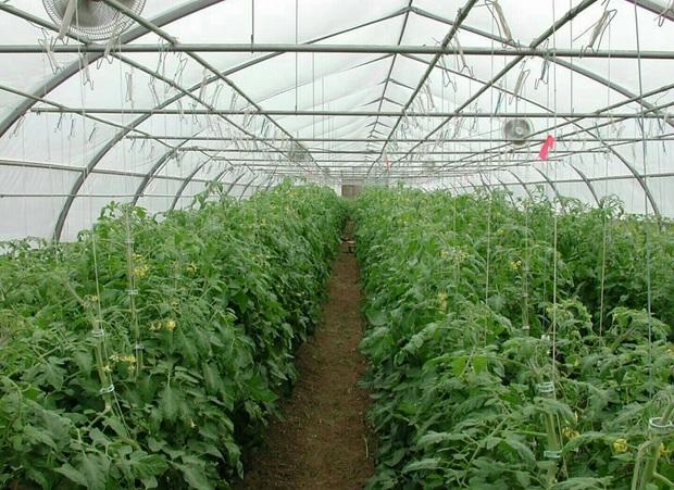 بهره برداران به سمت کشاورزی دانش بنیان بروند