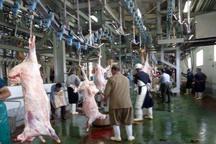 کشتارگاه صنعتی دام در زاهدان افتتاح شد