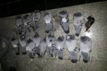 شکارچیان کبوتران وحشی در پاکدشت به دام افتادند