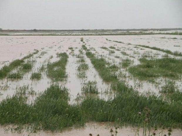 سیل 420 میلیارد ریال به بخش کشاورزی ایذه خسارت زد