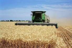 برداشت گندم با کمباین ضایعات را کاهش می دهد