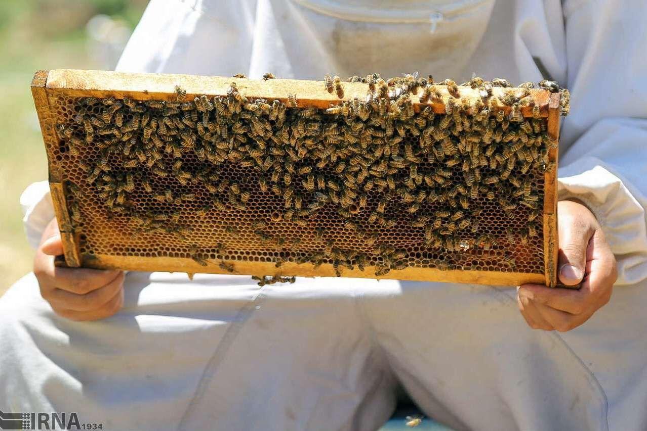 تغییر اقلیم  از مخاطرات زنبورداری است