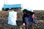 تولیدکنندگان بخش کشاورزی اردبیل تجلیل شدند