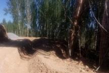 ذبح یکهزار اصله درخت پای کانال آب ۱۶۰ هکتار زمین کشاورزی سوخت