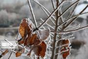 رویش مجدد باغهای سرمازده خراسان شمالی