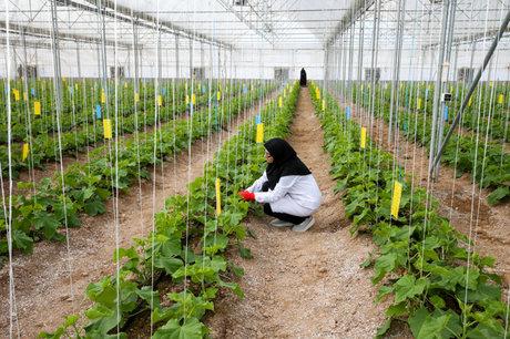 مطالعه 6 شهرک گلخانهای در اراضی ملی استان پیگیری میشود