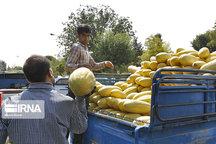 خراسان رضوی در خرید حمایتی محصولات کشاورزی پیشرو است