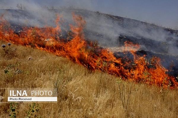 """آتش7 هکتار از مراتع و جنگلهای """"چم گرداب"""" را به نابودی کشاند"""