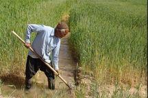 اطلاعات ۲۳۱۷ بهره بردار البرزی در سامانه جامع کشاورزی ثبت شد