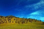 طرح بومسازگان زاگرس در ۷۵۰ هکتار از اراضی الیگودرز پایان یافت