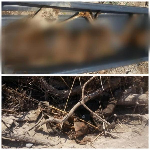 کشف جسد تجزیه شده یک مرد در بیشه عباس آباد