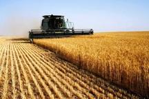 بخش کشاورزی فارس با چالش تامین نهاده ها مواجه است