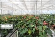 ۵۲ تولید کننده برتر بخش کشاورزی البرز معرفی شدند