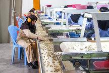 تخصیص بیش از 13 هزار میلیارد تومان اعتبار از صندوق توسعه ملی در راستای رونق اشتغال روستایی