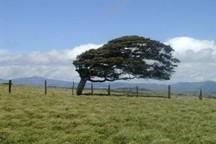 بارش پراکنده و وزش باد برای کهگیلویه و بویراحمد پیش بینی شد