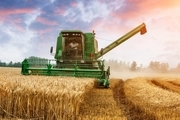 پیش بینی برداشت  بیش از ۸۰۰ هزار تن گندم از مزارع آذربایجانشرقی