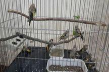 چهار متخلف زیست محیطی در لرستان دستگیر شدند
