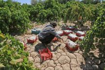۴۵۱۸ طرح اشتغال روستایی کردستان در انتظار پرداخت تسهیلات است