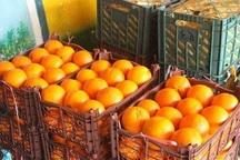 230 تن میوه شب عید در اشنویه توزیع می شود