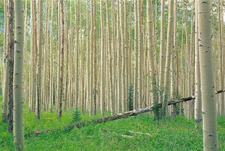 طرح ملی زراعت چوب تجارتی با سود دوجانبه