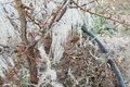 باغ های شاهرود دچار سرما زدگی شد  ۱۰۰ درصد محصولات خسارت دید