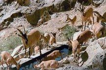 تخریب تلههای زندهگیری و کومههای شکاری در ایرانشهر