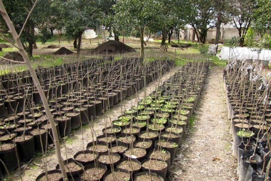 تولید سالانه ۳۵۰ هزار اصله نهال در نهالستانهای منابع طبیعی قزوین