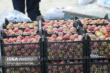 صادرات 128 میلیون دلاری کالاهای کشاورزی از گمرکات آذربایجان شرقی