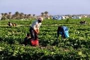 رئیس اتاق: فقدان مقررات موجب انباشت محصولات صادراتی کرمان شد