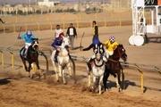 مسابقات اسبدوانی کورس پاییزه در یزد پیگیری شد