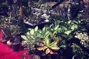 سومین نمایشگاه گل و گیاه در خرم آباد برگزار میشود