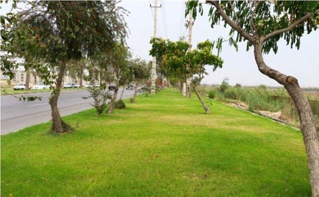 ایجاد مسیر سبز در محور یزد به تفت