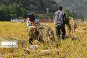 برترینهای کشاورزی مازندران تجلیل شدند