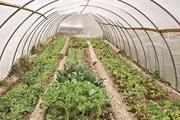 افزایش تولیدات گلخانه ای زمینه ساز توسعه چهارمحال و بختیاری است