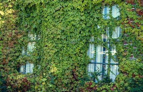گیاهانی برای تصفیه هوای آلوده