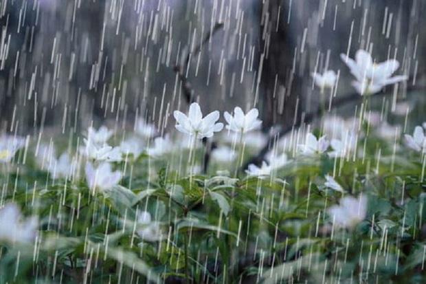 میانگین میزان بارندگی کهگیلویه و بویراحمد 856.6 میلیمتر است