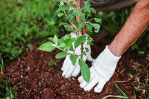 امسال چهار هزار هکتار از اراضی شیبدار لرستان درختکاری شده است